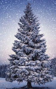 Kerstballen show, xmas, x-mas, christmas, kerstfeest